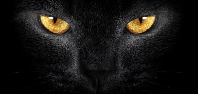 صورة جديد هل ترى القطط في الظلام