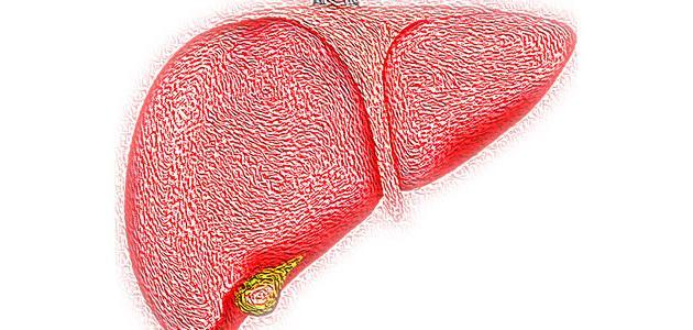 صورة جديد ارتفاع إنزيمات الكبد