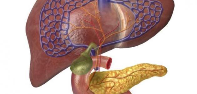 صورة جديد طرق تنظيف الكبد