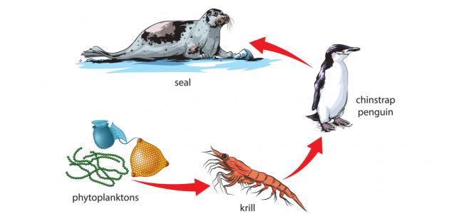 صورة جديد سلاسل غذائية للحيوانات