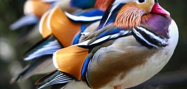 صورة جديد أجمل الطيور