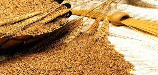 صورة جديد فوائد نخالة القمح