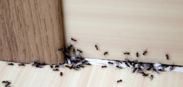 صورة جديد طرق التخلص من النمل في المنزل