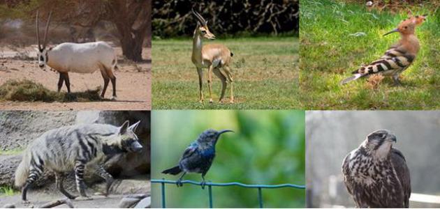 صورة جديد صيد الحيوانات في الأردن