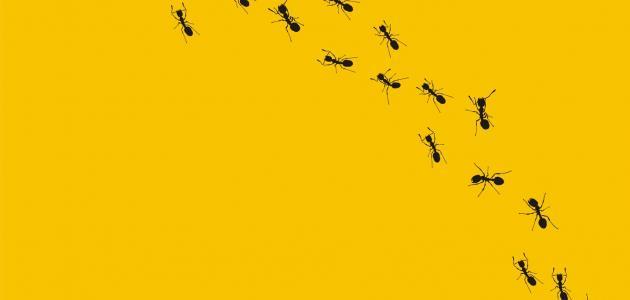 صورة معلومات عن النمل