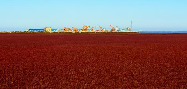صورة الشاطئ الأحمر في الصين