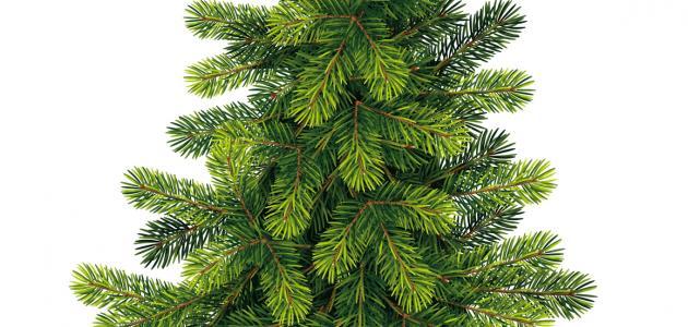 صورة موضوع عن أسبوع الشجرة