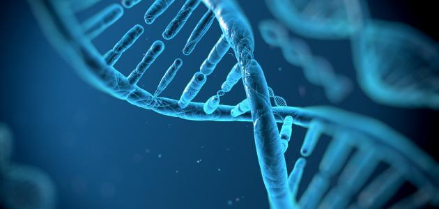 صورة ما وظيفة الحمض النووي DNA