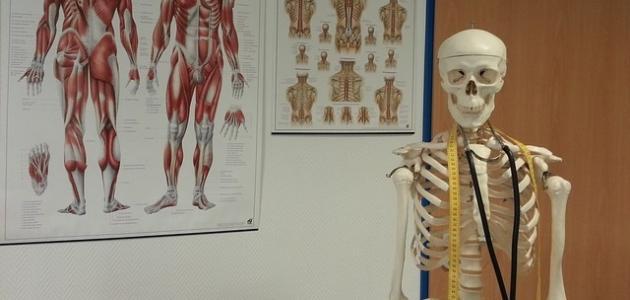 صورة كم عدد عظام جسم الإنسان