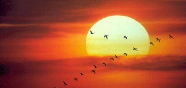 صورة كلام عن الشمس