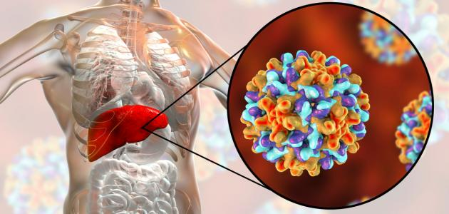 صورة فيروس الكبد ب