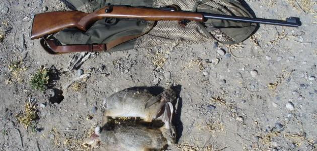 صورة كيفية صيد الأرانب