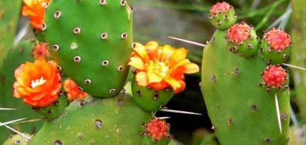 صورة بحث حول النباتات