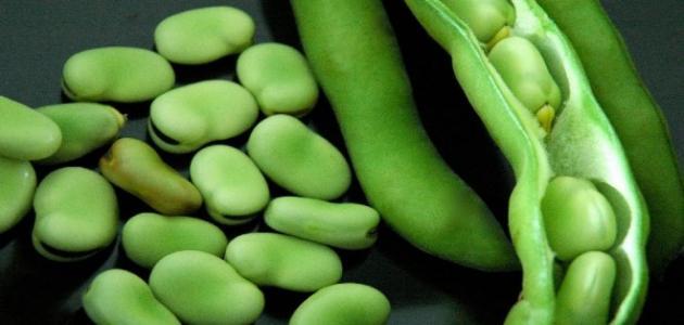 صورة فوائد الفول الأخضر