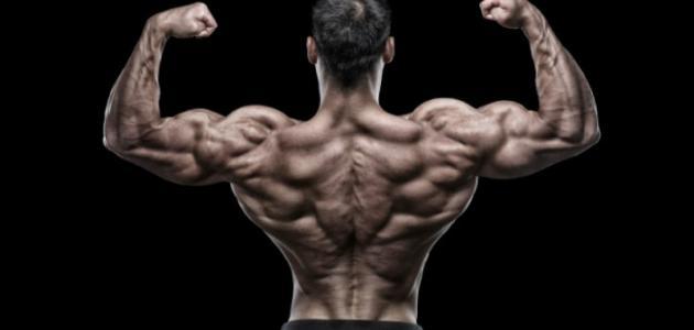 صورة تمزق عضلات الظهر
