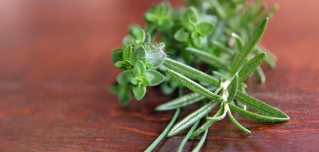 صورة أعشاب تحتوي على هرمون الإستروجين
