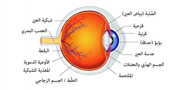 صورة أجزاء العين ووظائفها