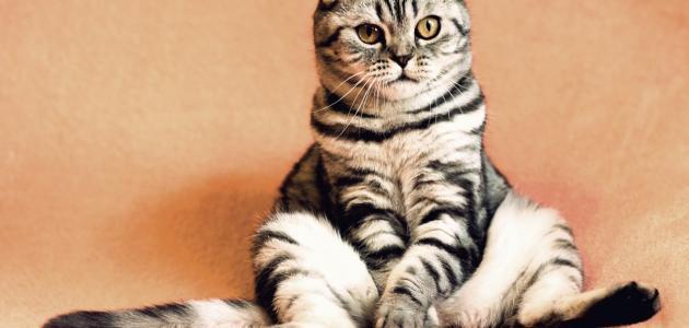 صورة كيفية التخلص من رائحة بول القطط