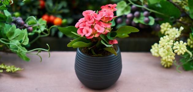 صورة بحث عن نباتات الزينة