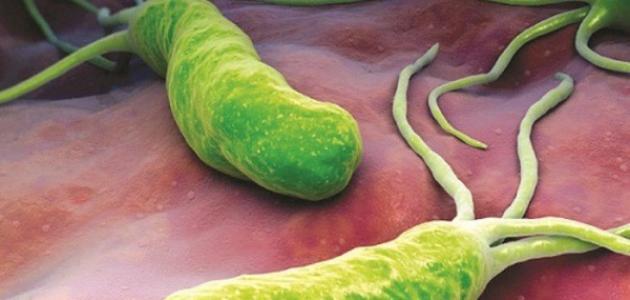 صورة تقرير عن البكتيريا