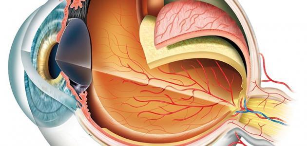 صورة من أول من شرح تركيب العين
