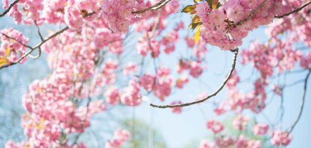 صورة حكم عن فصل الربيع