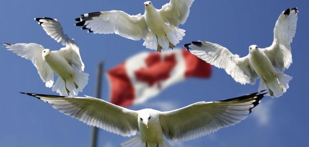 صورة ما هي اللغة الرسمية لدولة كندا