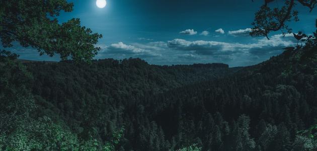 صورة أين تقع الغابة السوداء