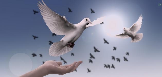 صورة حكمة عن السلام