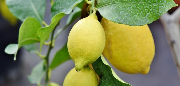 صورة ما فائدة أكل الليمون بقشره