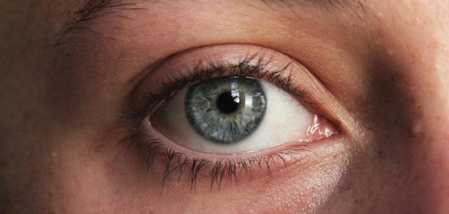 صورة أجزاء العين الخارجية