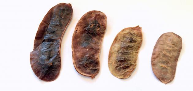 صورة ما هي أضرار عشبة السنامكي
