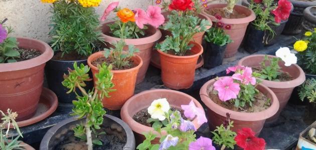 صورة كيفية زراعة نباتات الظل