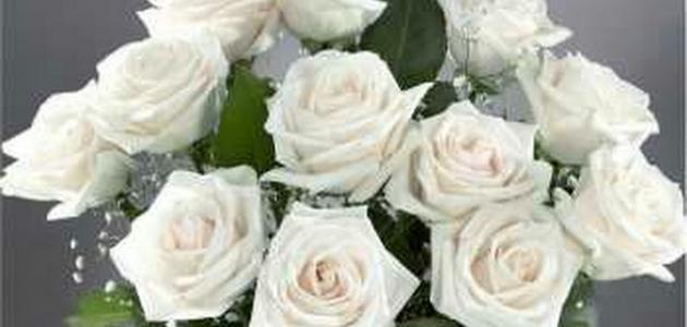 صورة على ماذا يدل الورد الأبيض