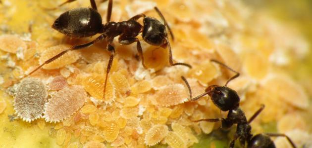 صورة تفسير رؤية النمل في المنام