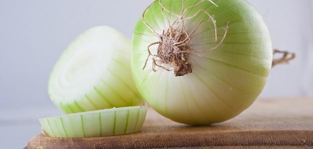 صورة طريقة عمل يخنة البصل