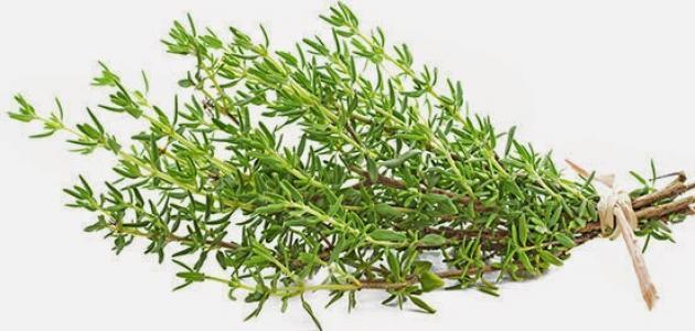 صورة فوائد شاي الزعتر البري