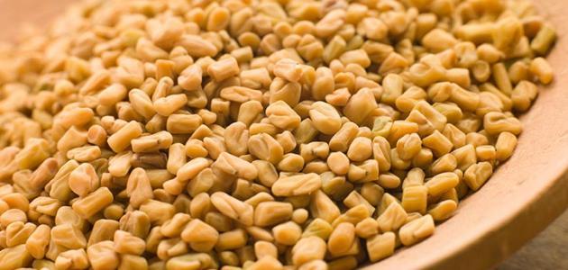 صورة فوائد الحلبة المطحونة لزيادة الوزن