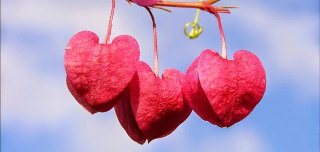 صورة أجمل عبارات الغزل والحب