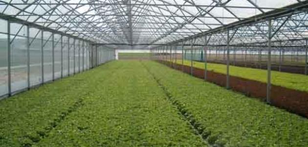 صورة أهمية الزراعة داخل البيوت البلاستيكية