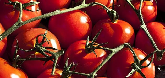 صورة طريقة زراعة طماطم