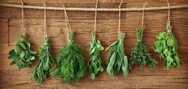 صورة فوائد بعض الأعشاب الطبية