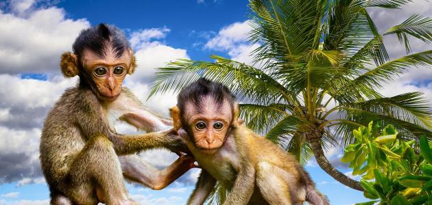 صورة طرائف وعجائب عالم الحيوان