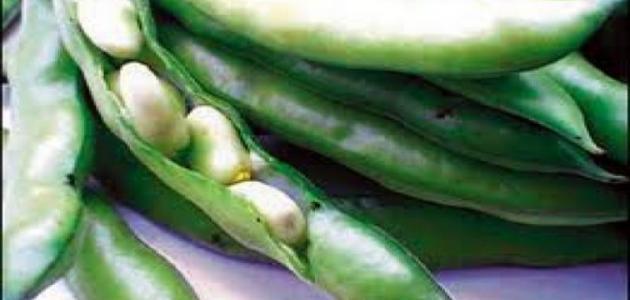 صورة طريقة طبخ الفول الأخضر