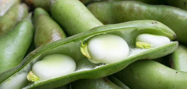 صورة طريقة عمل يخنة الفول الأخضر