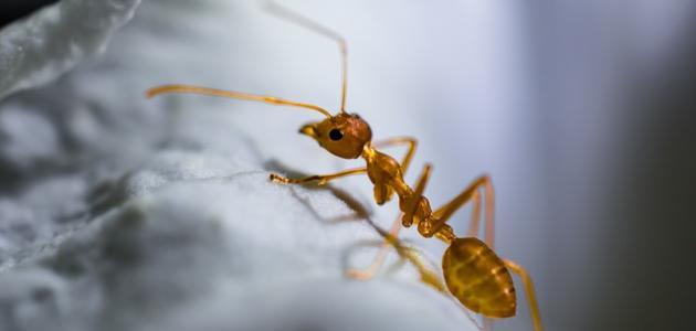 صورة ما هي الحشرة التي تكلمت في القرآن