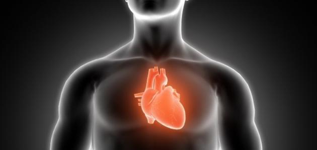 صورة فوائد القلب للجسم