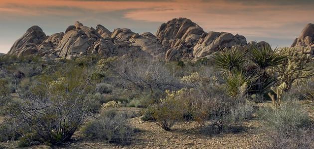 صورة أين تقع صحراء موهافي