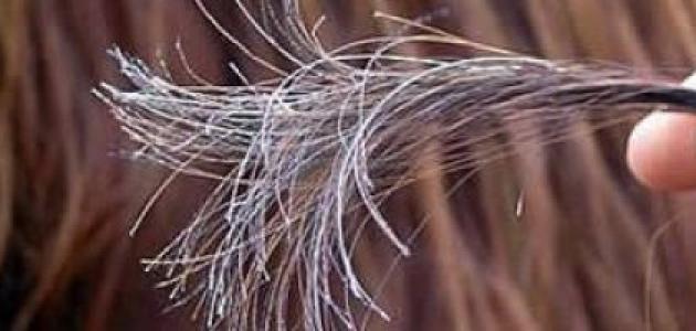 صورة كيف أعالج تقصف الشعر طبيعياً