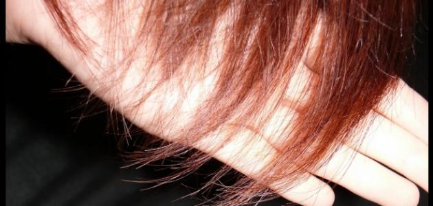صورة كيفية علاج الشعر المتقصف